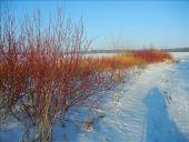 Point d'intérêt Braine-l'Alleud - Paysage d'hiver - Photo 1