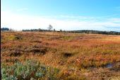 Point d'intérêt Spa - 2 - Malchamps, une mosaïque d'habitats - Photo 3