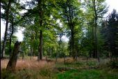 place Manhay - 4 – Exclos en forêt - Photo 2