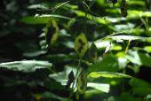 Point d'intérêt Huy - 2 - Habitats forestiers prioritaires - Photo 1