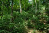 Point d'intérêt Huy - 1 - Buissons de ... buis - Photo 1