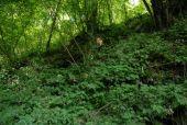 Point d'intérêt Huy - 2 - Habitats forestiers prioritaires - Photo 3