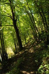 place Houyet - 3 - Bouquet d'arbres - Photo 2