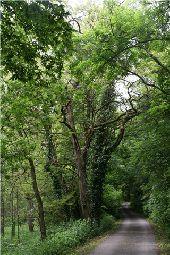 place Houyet - Route de la Reine - Photo 1