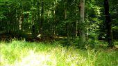 place PUISEUX-EN-RETZ - Point 22 - Photo 2