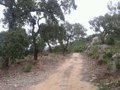 Point d'intérêt BORMES-LES-MIMOSAS - sentier dans la forêt des Maures - Photo 1