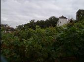 Point d'intérêt PARIS - Vigne - Photo 1