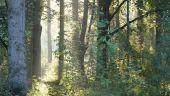 Point d'intérêt Wellin - vers Belles Plumes - Photo 1