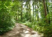 Point d'intérêt Sainte-Ode - Passage en forêt - Photo 1