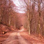 Point d'intérêt Saint-Hubert - Départ - Photo 1