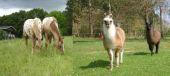 Point d'intérêt Tellin - Coray Farm - Photo 1