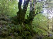 Point d'intérêt SEIX - 03 - Un arbre aux racines dévorantes - Photo 1