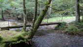Point d'intérêt Saint-Hubert - Forêt de Saint-Hubert - Photo 1
