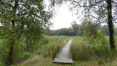 place Tenneville - Forêt de Saint-Hubert - Photo 1