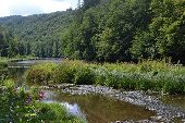 Point d'intérêt La Roche-en-Ardenne - 4 – Forêt alluviale et mégaphorbiaie - Photo 1