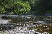 Point d'intérêt La Roche-en-Ardenne - 4 – Forêt alluviale et mégaphorbiaie - Photo 2