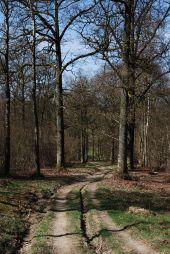 Point d'intérêt Ciney - Bois des Aunes - Photo 3