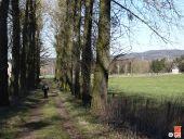 place La Calamine - La drève avant le château d'Eyneburg. - Photo 1