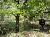 place FONTAINEBLEAU - 21 - Un joli chêne dans une jolie mare - Photo 1