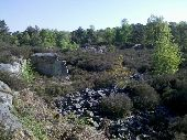 place FONTAINEBLEAU - 04 - La mini-platière cote ''136'' - Photo 1