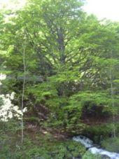 Point d'intérêt COUFLENS - La Lanette - Photo 1