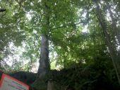Point d'intérêt OTTROTT - 01 - Le Château d'Ottrott, pas très visible à travers les arbres - Photo 1