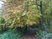 Point d'intérêt TAGOLSHEIM - le bel automne - Photo 1