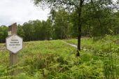 Point d'intérêt Tenneville - Mochamps : forêt et fagne - Photo 3