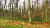 place PUISEUX-EN-RETZ - Point 55 - Photo 1