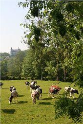 Point d'intérêt Rochefort - Ciergnon - Photo 1