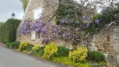 place CHEVREUSE - Glycine - Photo 1