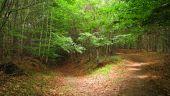 place SAINT-JEAN-AUX-BOIS - Point 46 - Photo 11
