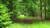 place SAINT-JEAN-AUX-BOIS - Point 44 - Photo 2