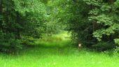 place SAINT-JEAN-AUX-BOIS - Point 31 - Photo 1