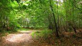 place SAINT-JEAN-AUX-BOIS - Point 46 - Photo 10