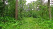 Point d'intérêt SAINT-JEAN-AUX-BOIS - Point 5 - Photo 3