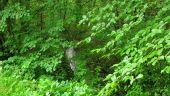 place SAINT-JEAN-AUX-BOIS - Point 11 - Photo 1