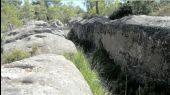 place FONTAINEBLEAU - Mastodontes - Photo 1