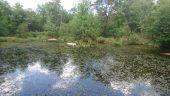 Point d'intérêt LE VAUDOUE - 06 - La Mare aux grenouilles - Photo 1