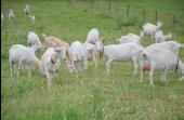 Point d'intérêt Sainte-Ode - La chèvrerie de la Ferme d'antan - Photo 2