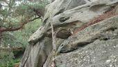 place NEMOURS - 22 - Un cygne, ou un serpent (?)...<br> - Photo 1