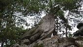 place NEMOURS - 21 - Un phoque, un éléphant de mer, ou...? - Photo 1