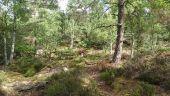 Point d'intérêt LE VAUDOUE - 03 - Un hors piste bien agréable - Photo 1