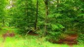Point d'intérêt SAINT-JEAN-AUX-BOIS - Point 40 - Photo 6