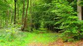 Point d'intérêt SAINT-JEAN-AUX-BOIS - Point 40 - Photo 3