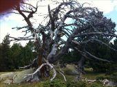 place LES ANGLES - Nature morte - Photo 1
