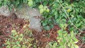 place MAUREPAS - Borne royale Hors Circuit - Photo 1
