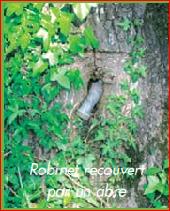 place LE PETIT-FOUGERAY - Robinet recouvert par un arbre - Photo 1
