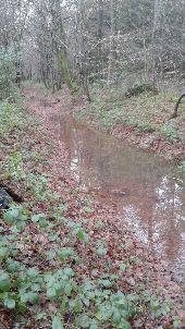 Point d'intérêt SOULIGNY - Chemin creux humide - Photo 1