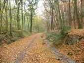 place Thuin - Bois de la Grattière - Photo 1